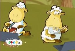 Ovce - rozpravka