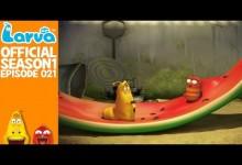 Larva: Melon