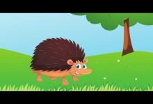 Jezko a pichlavy kozusok (audio)