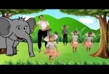 Paci Pac: Slon
