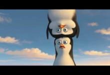 Tucniaky z Madagaskaru: Antarktida